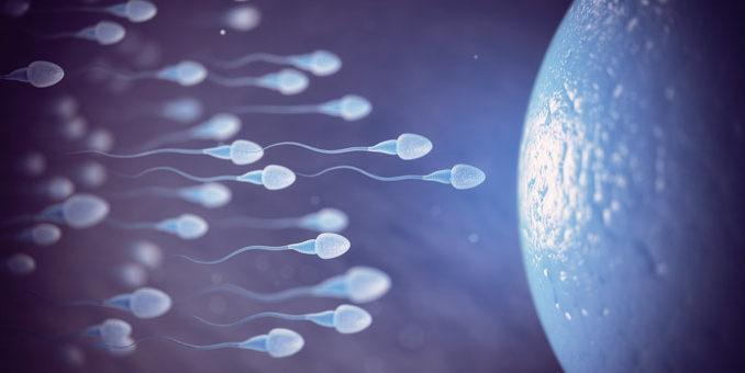 bme sperm and egg